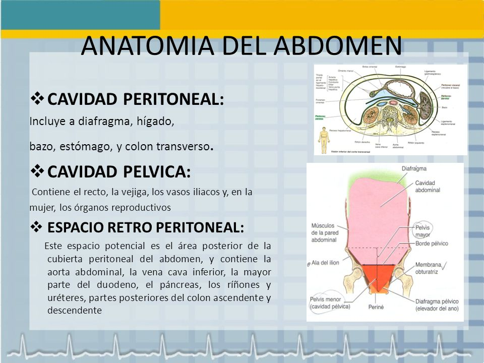 Moderno Lo Que Es Una Cavidad En La Anatomía Ilustración - Anatomía ...