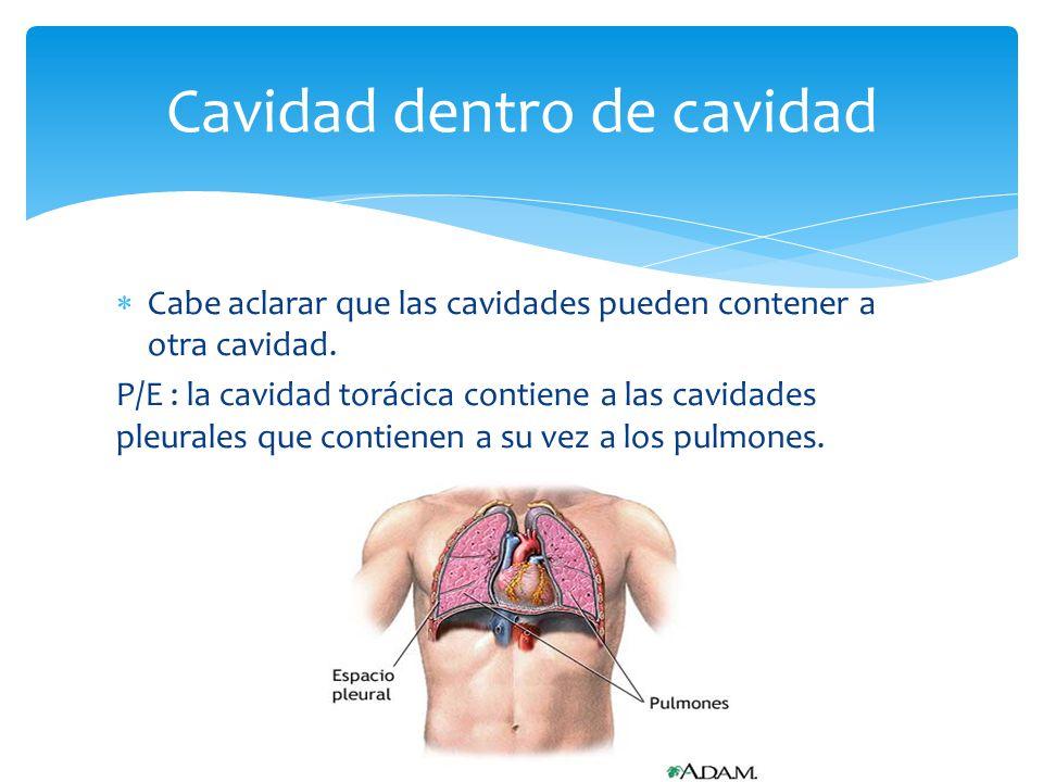 Cavidades del Cuerpo y Órganos en General - ppt descargar
