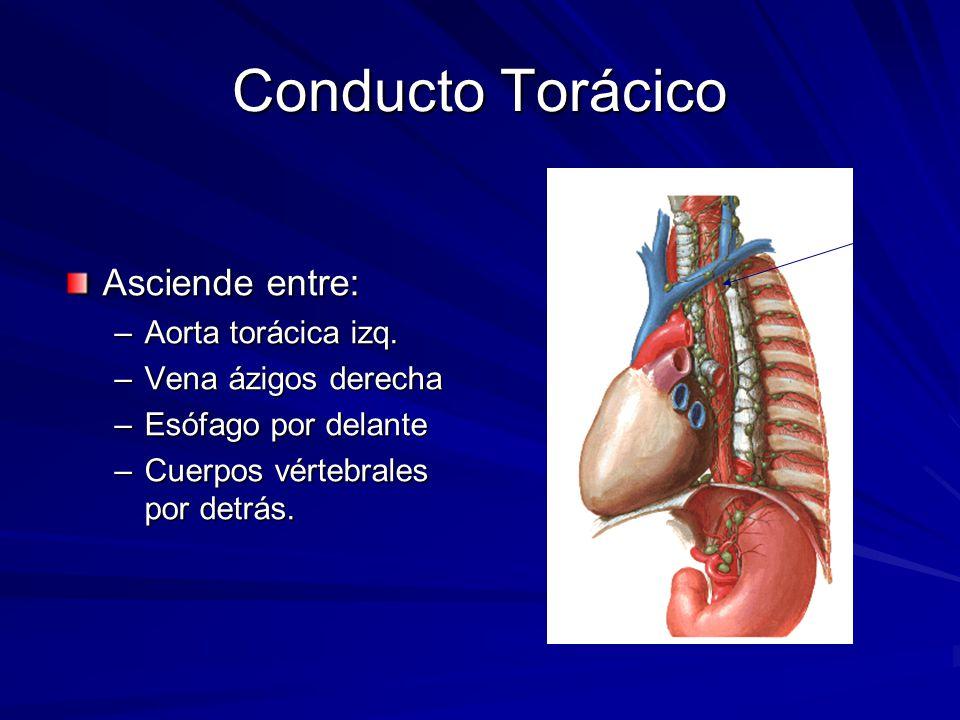 Magnífico Embolización Conducto Torácico Ilustración - Anatomía de ...