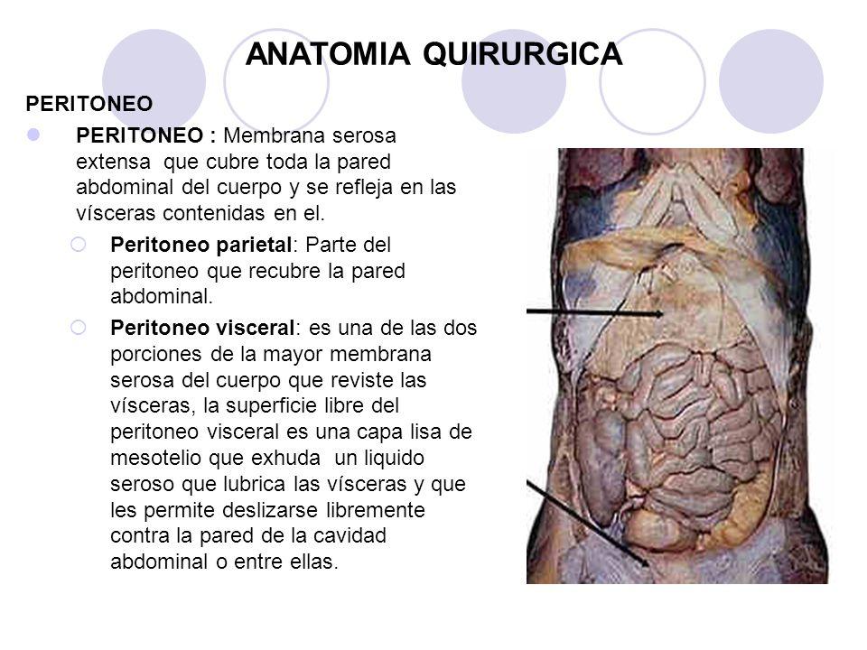 Increíble Cuál Es La Anatomía Quirúrgica Componente - Anatomía de ...