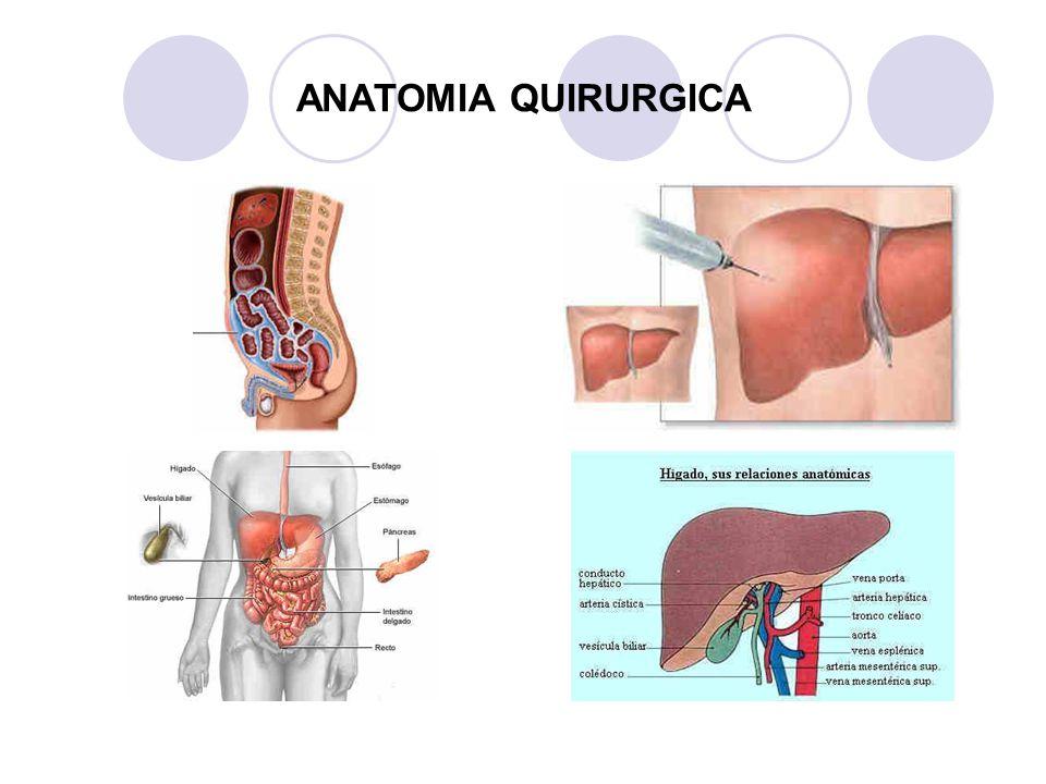 Lujo Anatomía Quirúrgica De La Cara Elaboración - Anatomía de Las ...