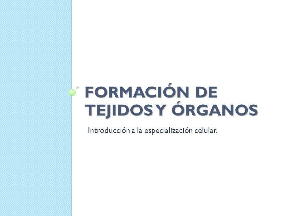 FORMACIÓN DE TEJIDOS Y ÓRGANOS