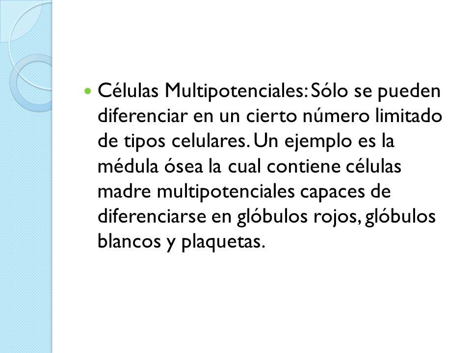Células Multipotenciales: Sólo se pueden diferenciar en un cierto número limitado de tipos celulares.