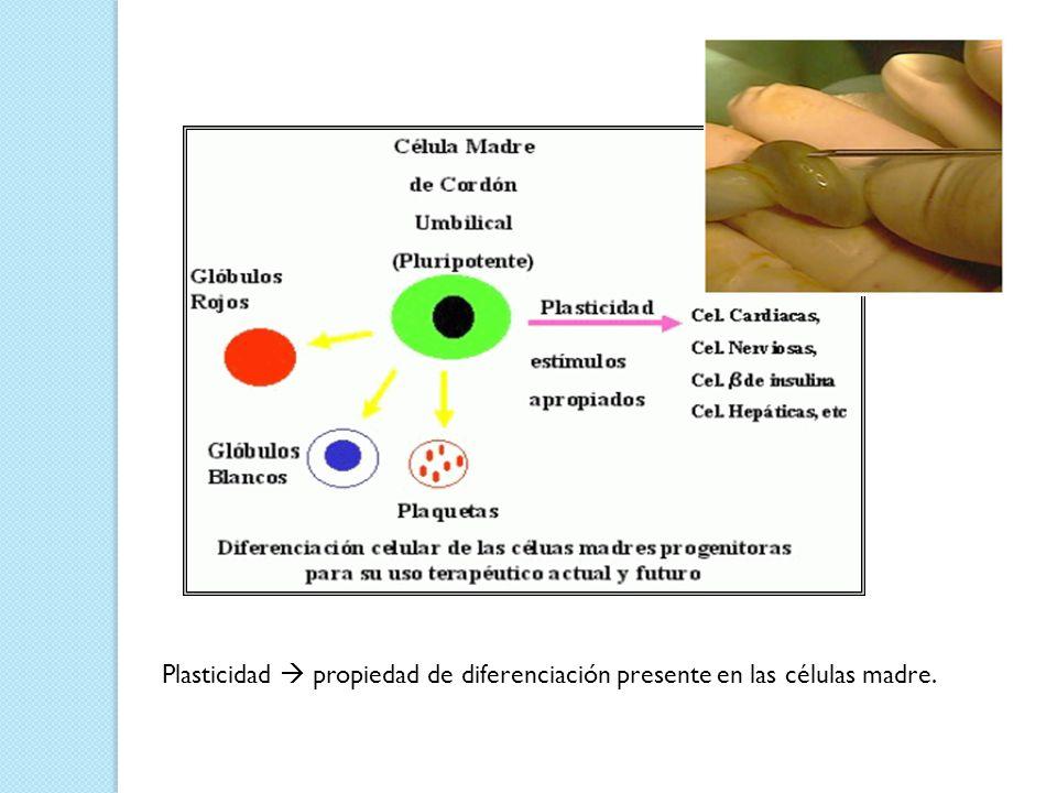 Plasticidad  propiedad de diferenciación presente en las células madre.