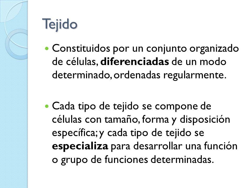 Tejido Constituidos por un conjunto organizado de células, diferenciadas de un modo determinado, ordenadas regularmente.