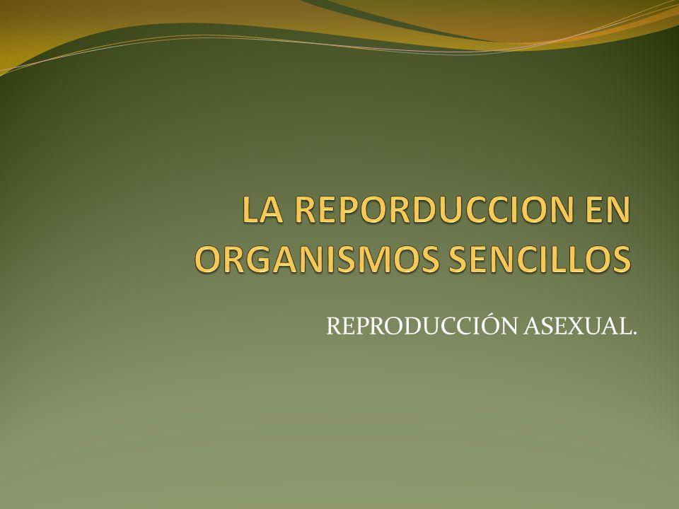 LA REPORDUCCION EN ORGANISMOS SENCILLOS
