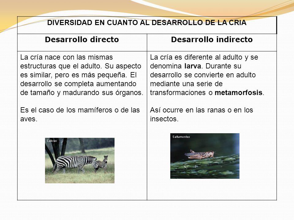 DIVERSIDAD EN CUANTO AL DESARROLLO DE LA CRIA