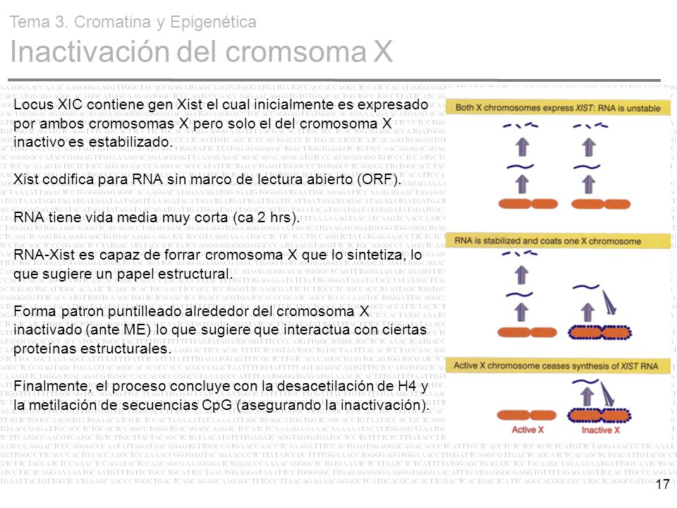 Cromatina y Epigenética - ppt video online descargar