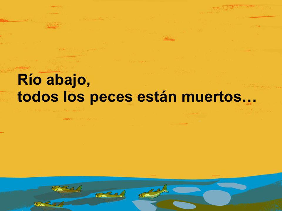 Río abajo, todos los peces están muertos…