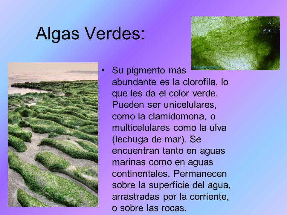 Algas Verdes: