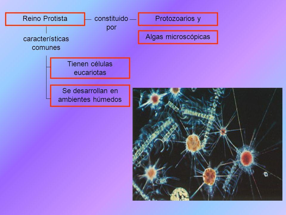 características comunes Reino Protista