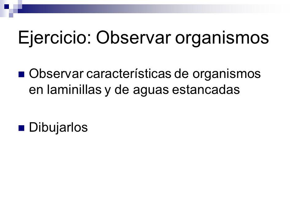 Ejercicio: Observar organismos