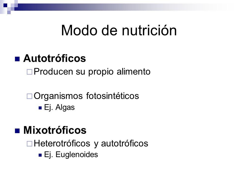 Modo de nutrición Autotróficos Mixotróficos