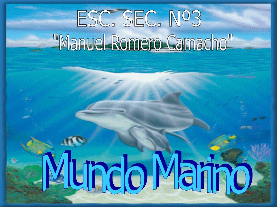 ESC. SEC. Nº3 Manuel Romero Camacho Mundo Marino