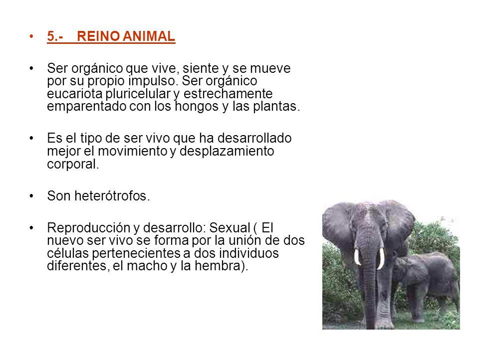 5.- REINO ANIMAL