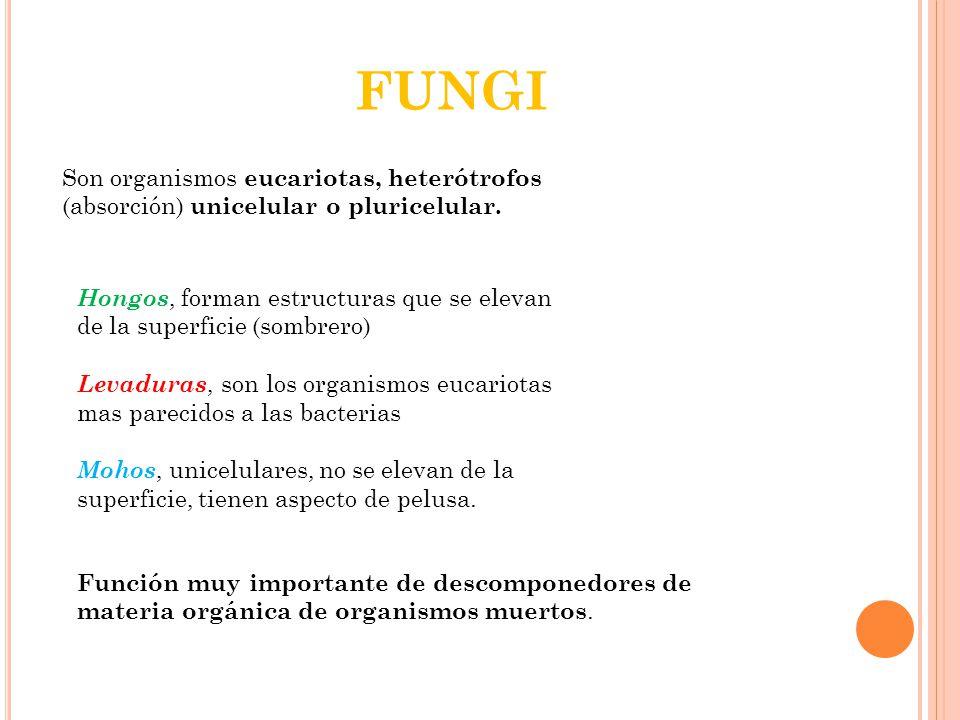 FUNGI Son organismos eucariotas, heterótrofos (absorción) unicelular o pluricelular.