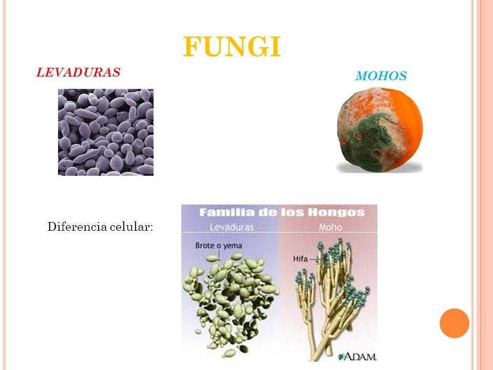 FUNGI LEVADURAS MOHOS Diferencia celular: