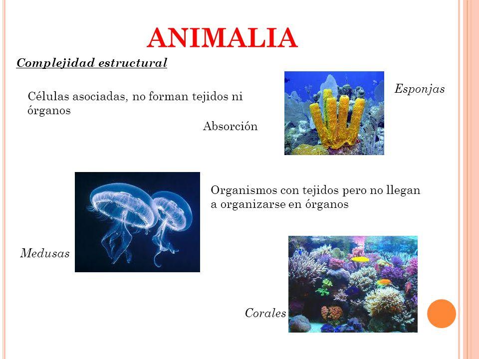 ANIMALIA Complejidad estructural Esponjas