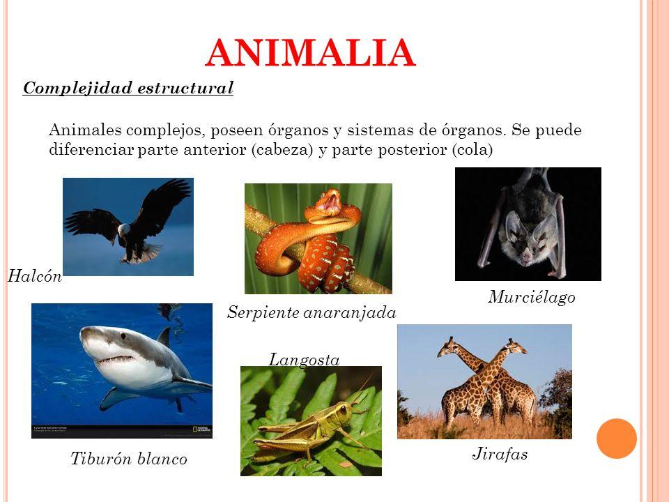ANIMALIA Complejidad estructural