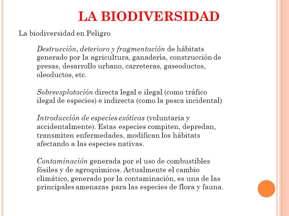 LA BIODIVERSIDAD La biodiversidad en Peligro