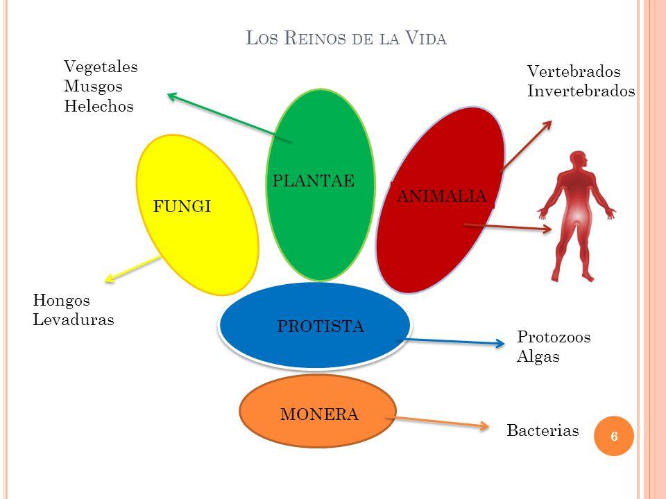 Los Reinos de la Vida Vegetales Vertebrados Musgos Invertebrados