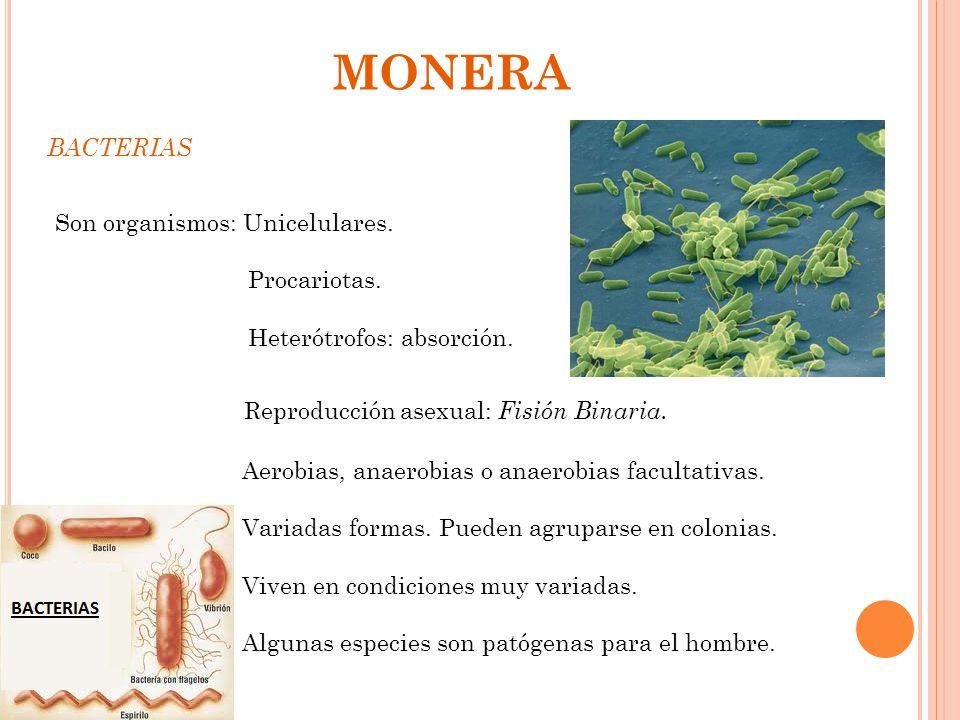 MONERA BACTERIAS Son organismos: Unicelulares. Procariotas.