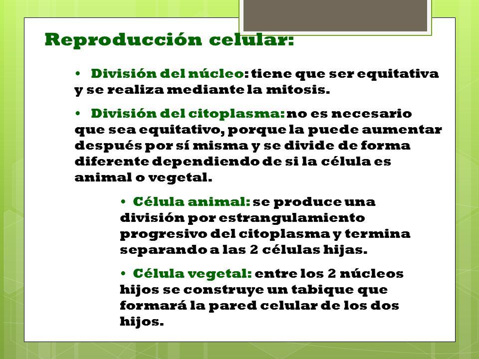 Reproducción celular: