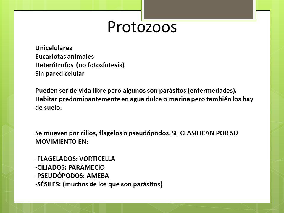 Protozoos Unicelulares Eucariotas animales