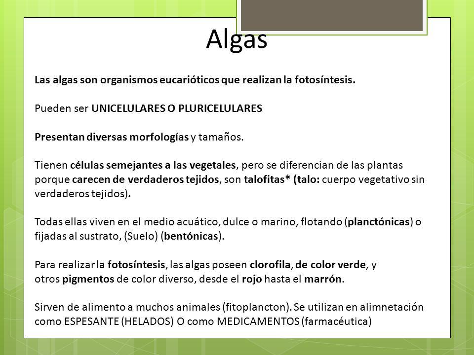 Algas Las algas son organismos eucarióticos que realizan la fotosíntesis. Pueden ser UNICELULARES O PLURICELULARES.