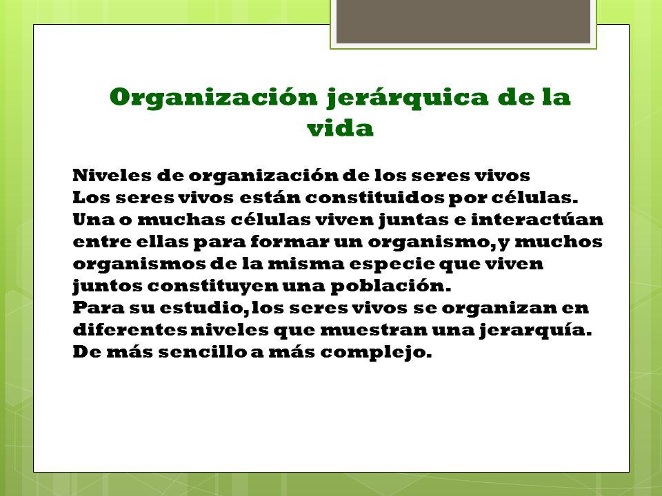 Organización jerárquica de la vida