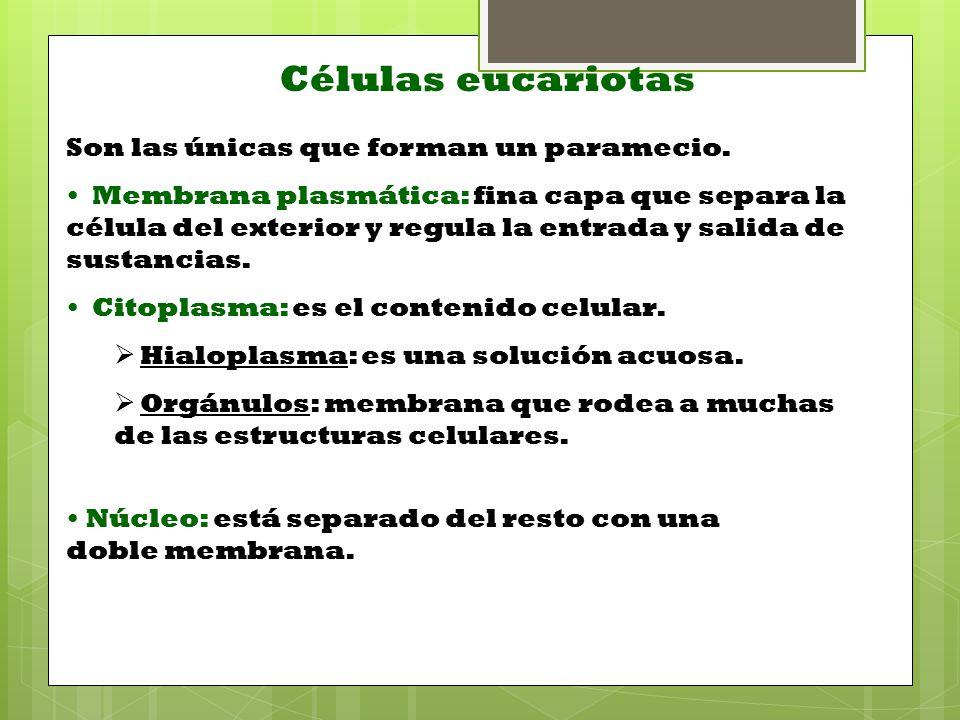 Células eucariotas Son las únicas que forman un paramecio.