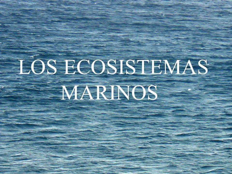 LOS ECOSISTEMAS MARINOS