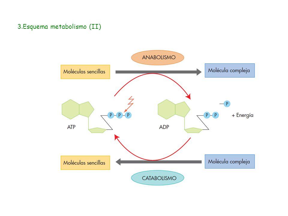 Autotrofos fotosinteticos y quimiosinteticos 35