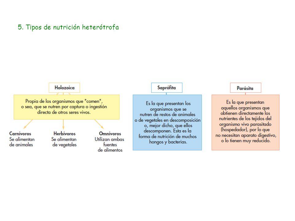 Autotrofos fotosinteticos y quimiosinteticos 62