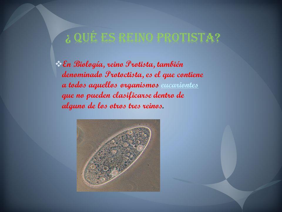 ¿ Qué es Reino Protista