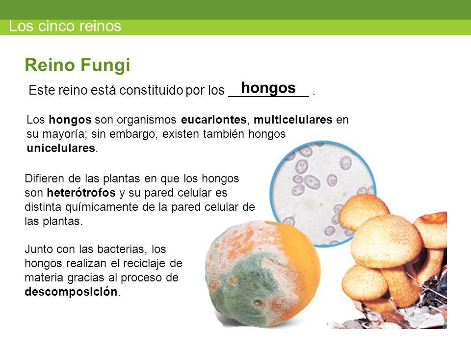 Reino Fungi Los cinco reinos hongos