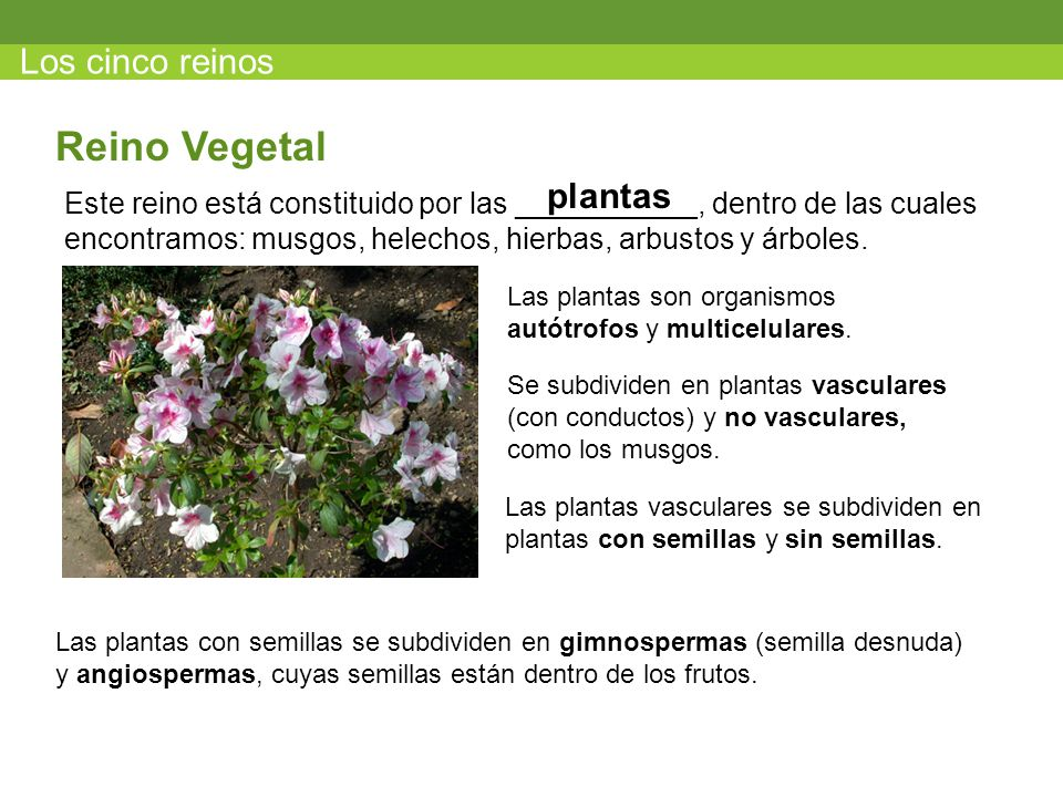 Reino Vegetal Los cinco reinos plantas