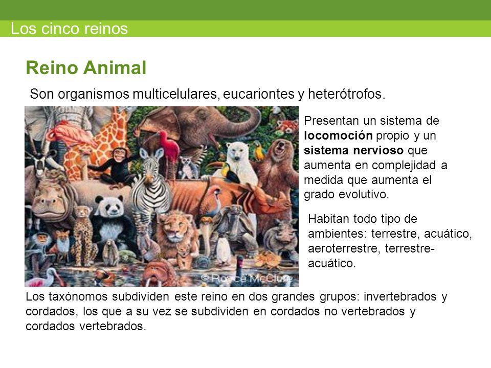 Reino Animal Los cinco reinos