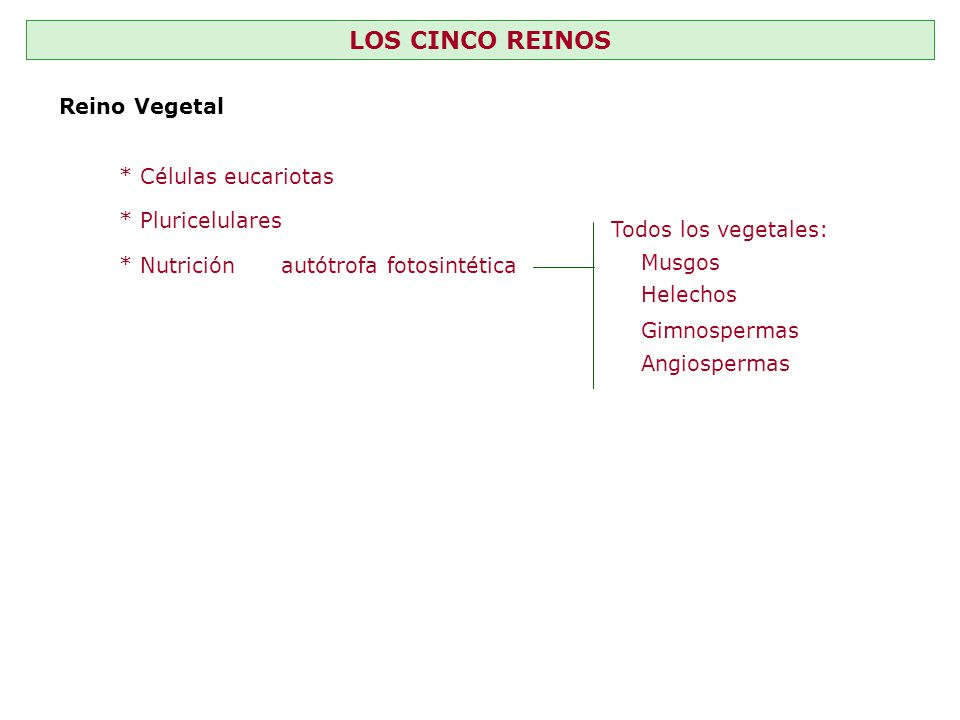 LOS CINCO REINOS Reino Vegetal * Células eucariotas * Pluricelulares