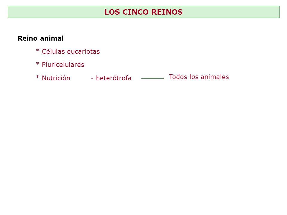 LOS CINCO REINOS Reino animal * Células eucariotas * Pluricelulares