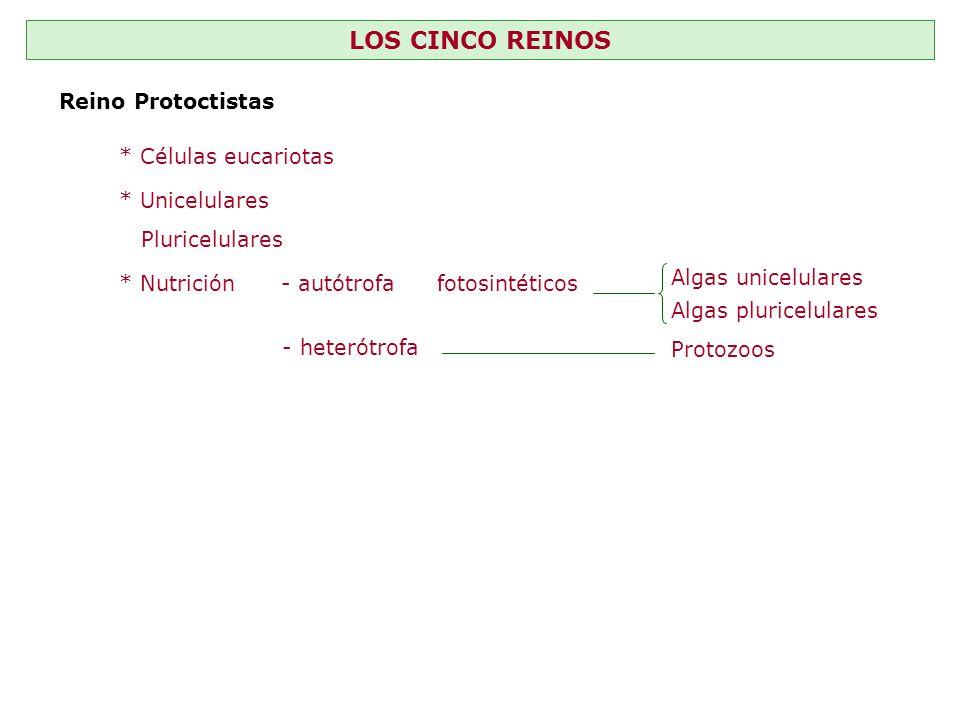 LOS CINCO REINOS Reino Protoctistas * Células eucariotas