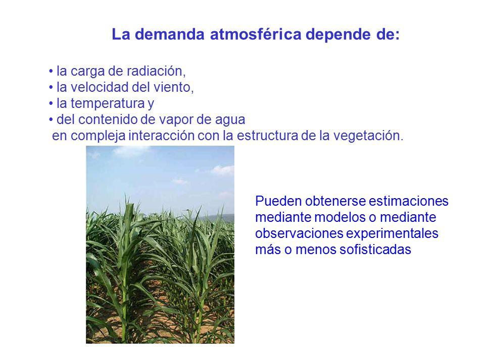 3 movimiento del agua en fase vapor ppt descargar for Modelo demanda clausula suelo
