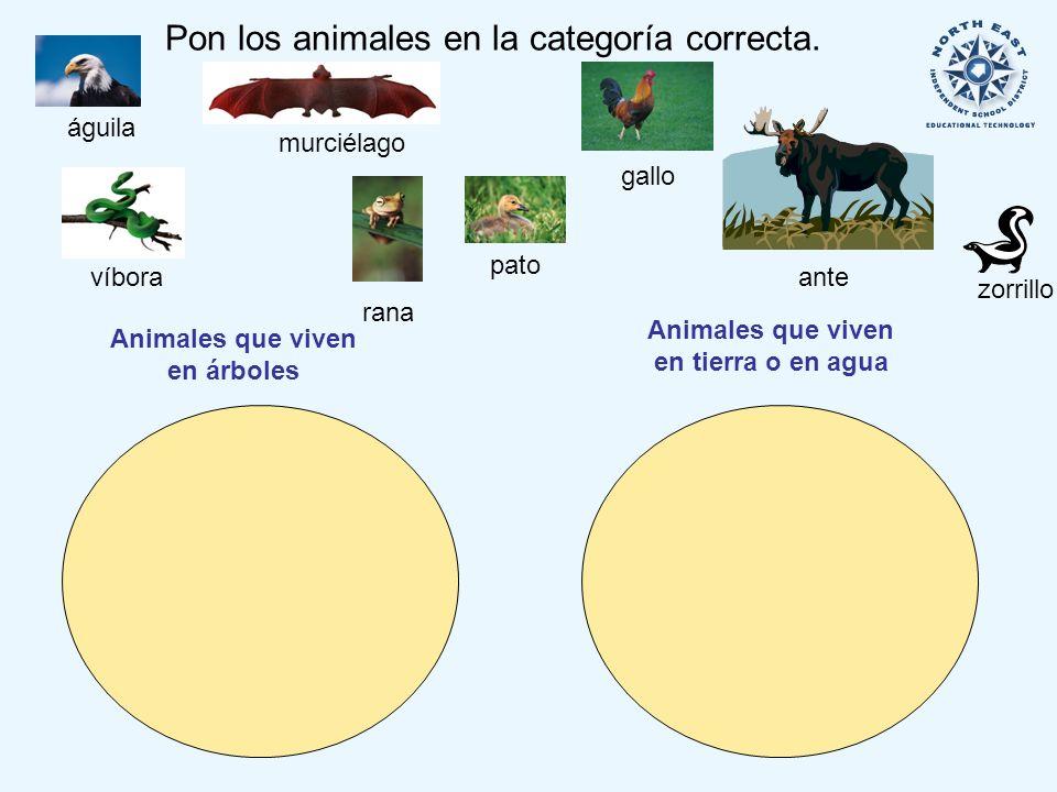 Pon los animales en la categoría correcta.