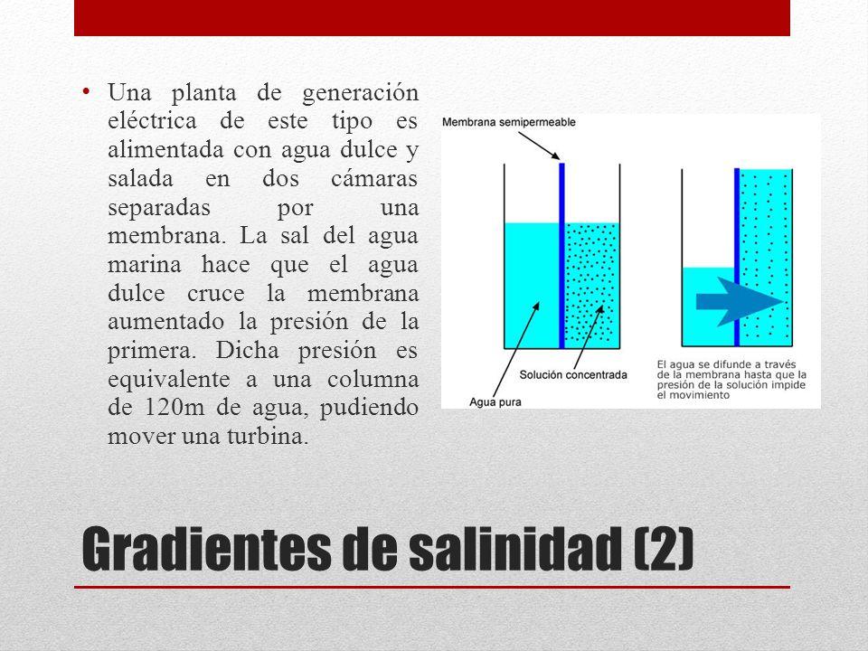 Gradientes de salinidad (2)