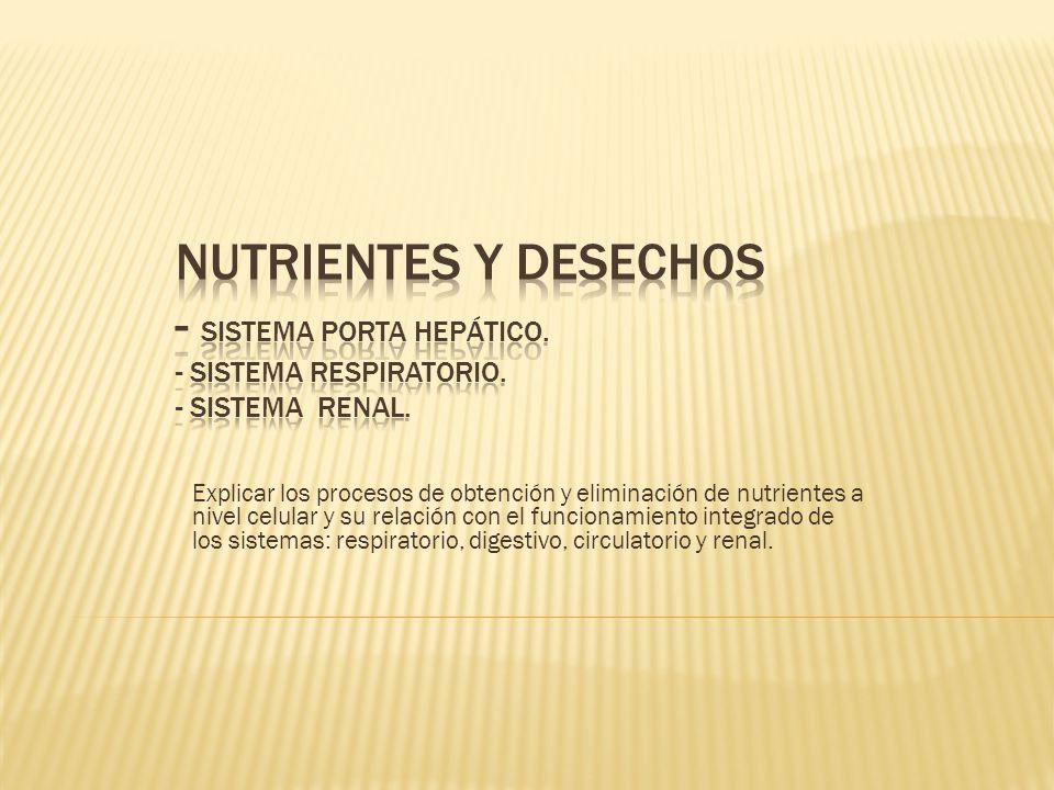 Nutrientes y desechos - Sistema Porta hepático. - Sistema respiratorio