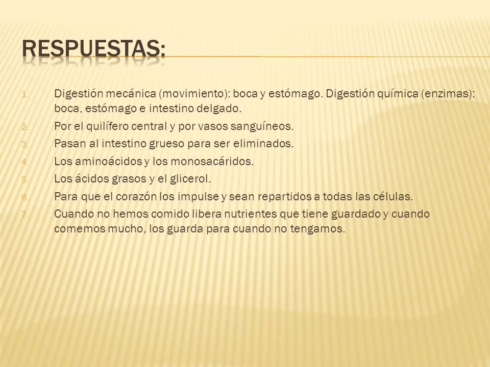Respuestas: Digestión mecánica (movimiento): boca y estómago. Digestión química (enzimas): boca, estómago e intestino delgado.