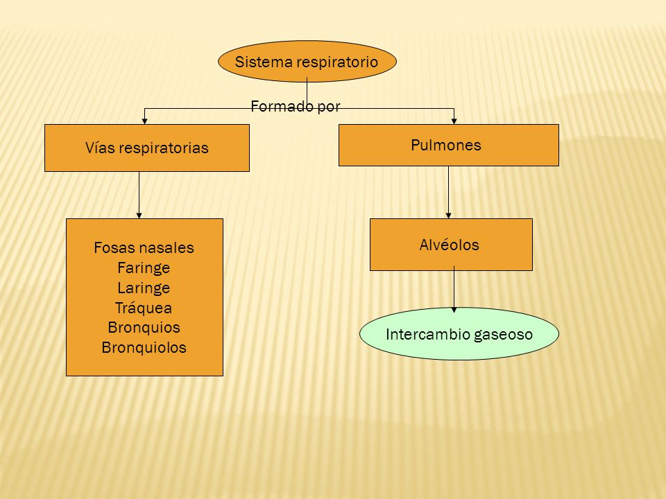 Sistema respiratorio Formado por. Vías respiratorias. Pulmones. Fosas nasales. Faringe. Laringe.
