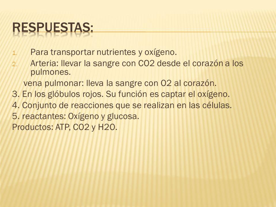 Respuestas: Para transportar nutrientes y oxígeno.