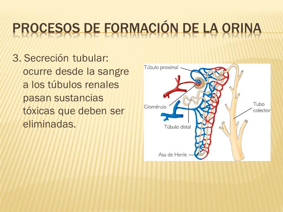 Procesos de formación de la orina