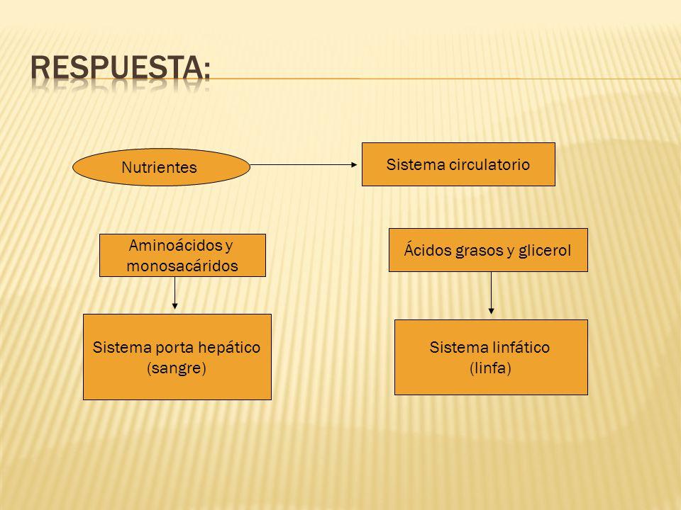 Respuesta: Sistema circulatorio Nutrientes Aminoácidos y